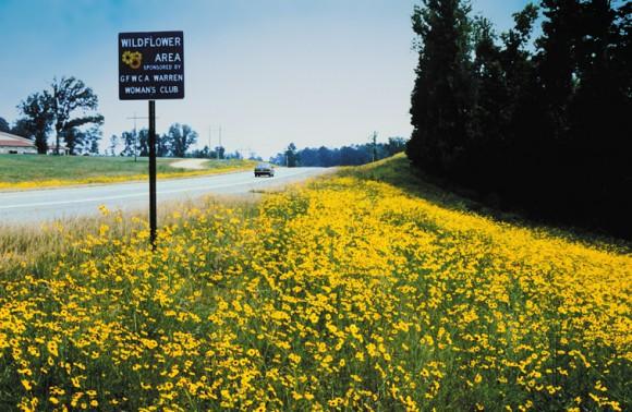 wildflower_area